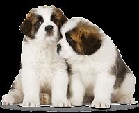 Cachorros amigos png