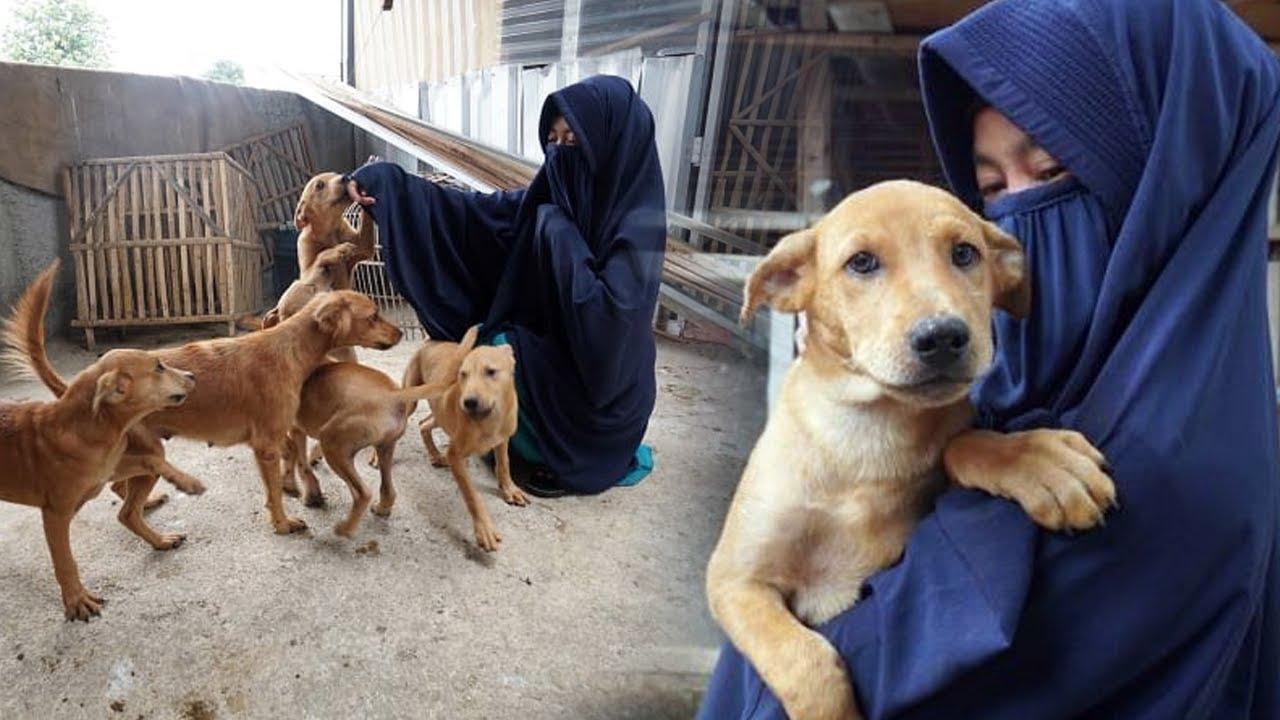 Warga Usir 70 Anjing Milik Perempuan Bercadar di Bogor, Pemilik Minta Bantuan Hotman Paris