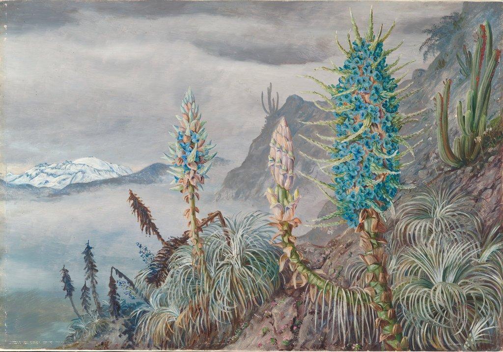 Ilustraciones botánicas de plantas de todo el mundo
