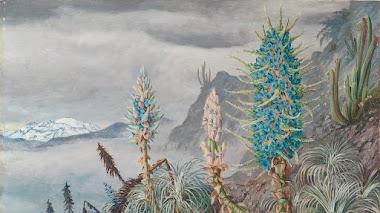 Marianne North, el arte de observar y pintar la naturaleza