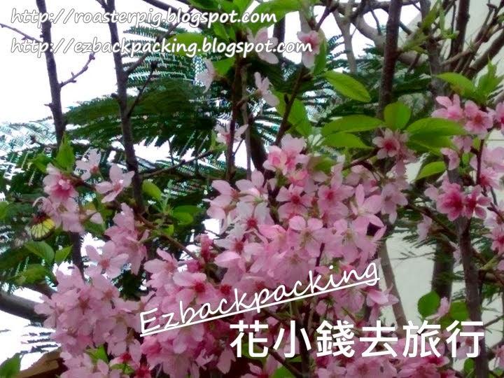 2021年香港花卉展覽+櫻花庭園
