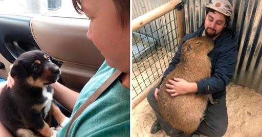 18 фотографий, которые доказывают, что животные на 99 % состоят из любви