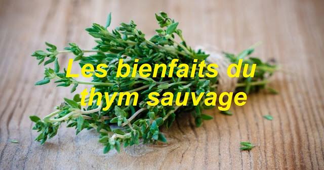 Thym Propriétés Arômes Bienfaits Effets secondaires