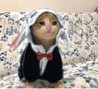 كوميك القطة اللي بتعيط