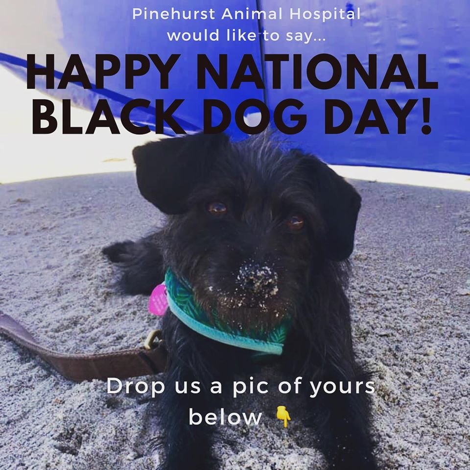 National Black Dog Day Wishes Beautiful Image
