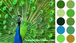 peacock color palette, peacock colors
