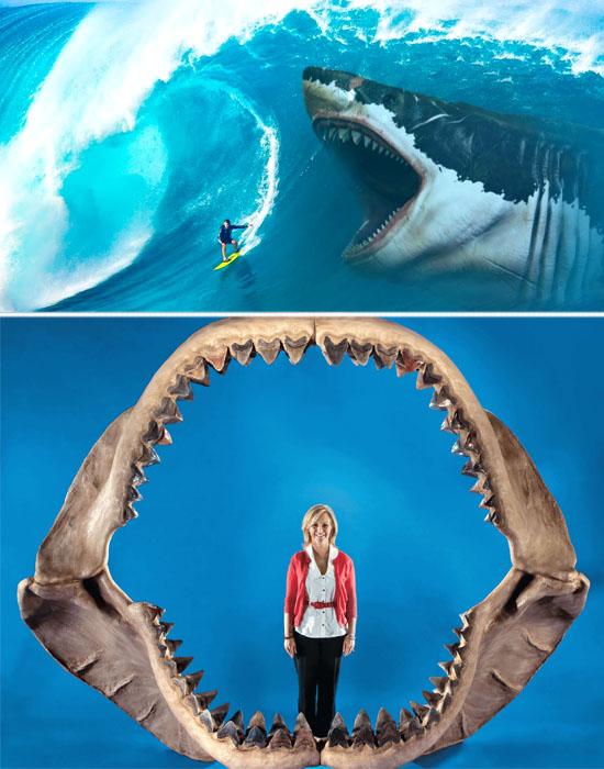 Tubarão maior que um Tiranossauro - Megalodon pode ainda pode existir - img Comparacao 2