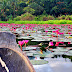 Searching for the Lotus-Eaters in Lake Sebu | South Cotabato