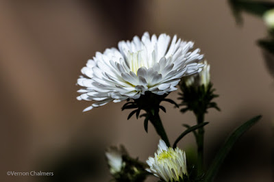Canon EOS 70D/ EF 100mm f/2.8 Macro USM Lens -  Close-Up / Macro Flowers