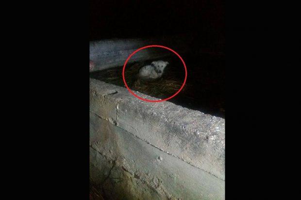 Αργολίδα: Βρήκαν σκύλο στην Τίρυνθα μέσα σε στέρνα γεμάτη νερό με το σχοινί γύρω απ' τον λαιμό του