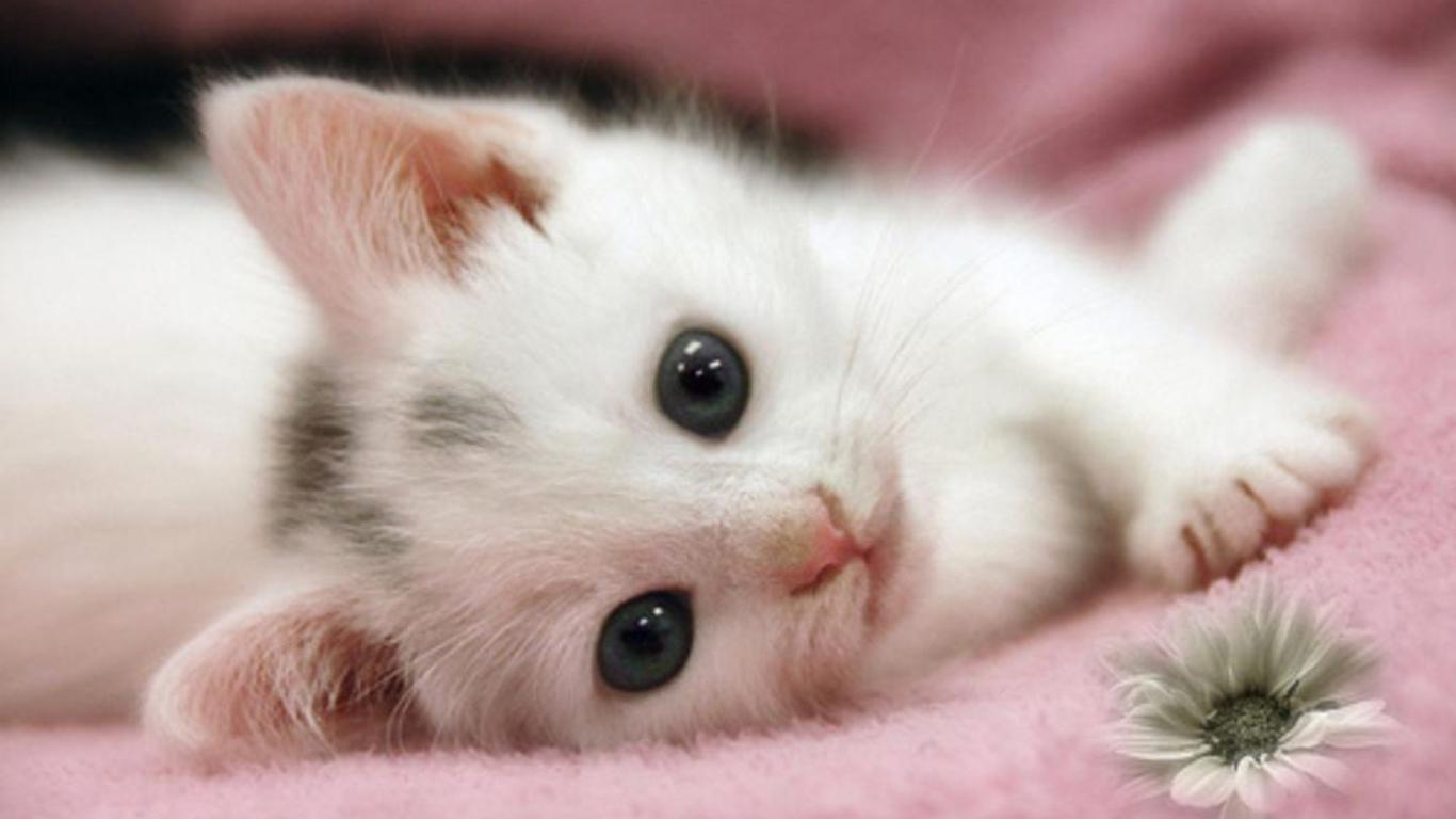 Cute cat wallpaper hd cat wallpaper - Cute kittens hd wallpaper free download ...