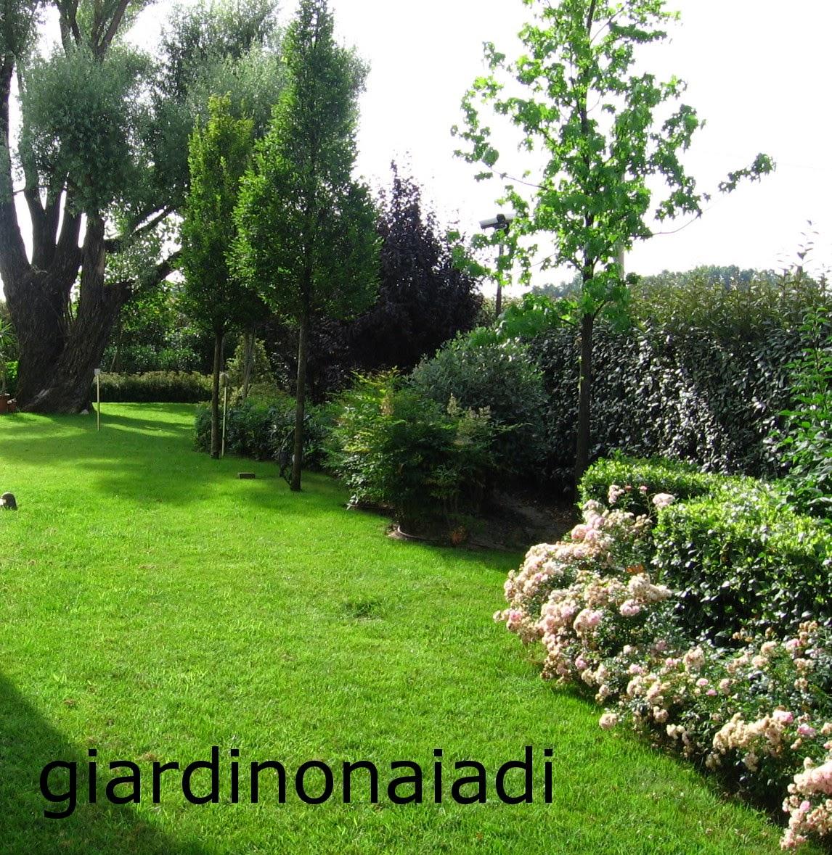 Alberi Nani Da Giardino il giardino delle naiadi: un giardino bello tutto l'anno
