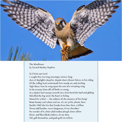 The Windhover is a bird or a species of bird with the rare ability to hover in the air.