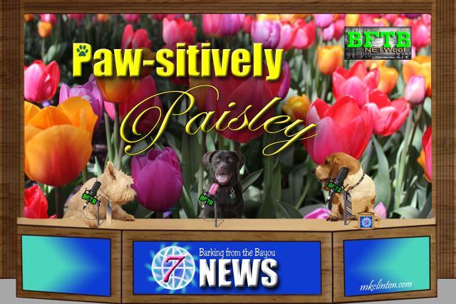 Spring Grooming Tips with Paw-sitively Paisley