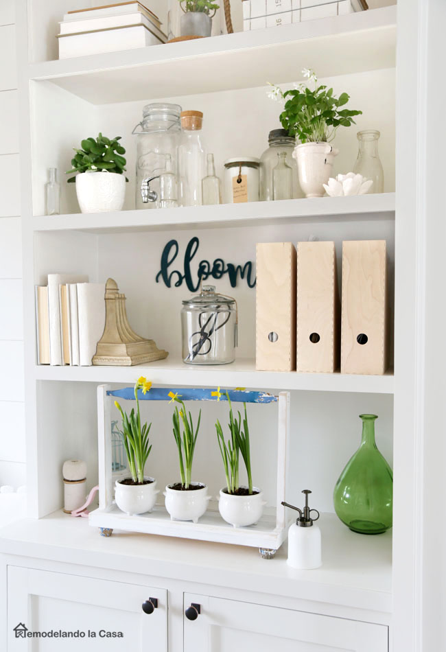 daffodils, succulents, bottles and books on shelves in office