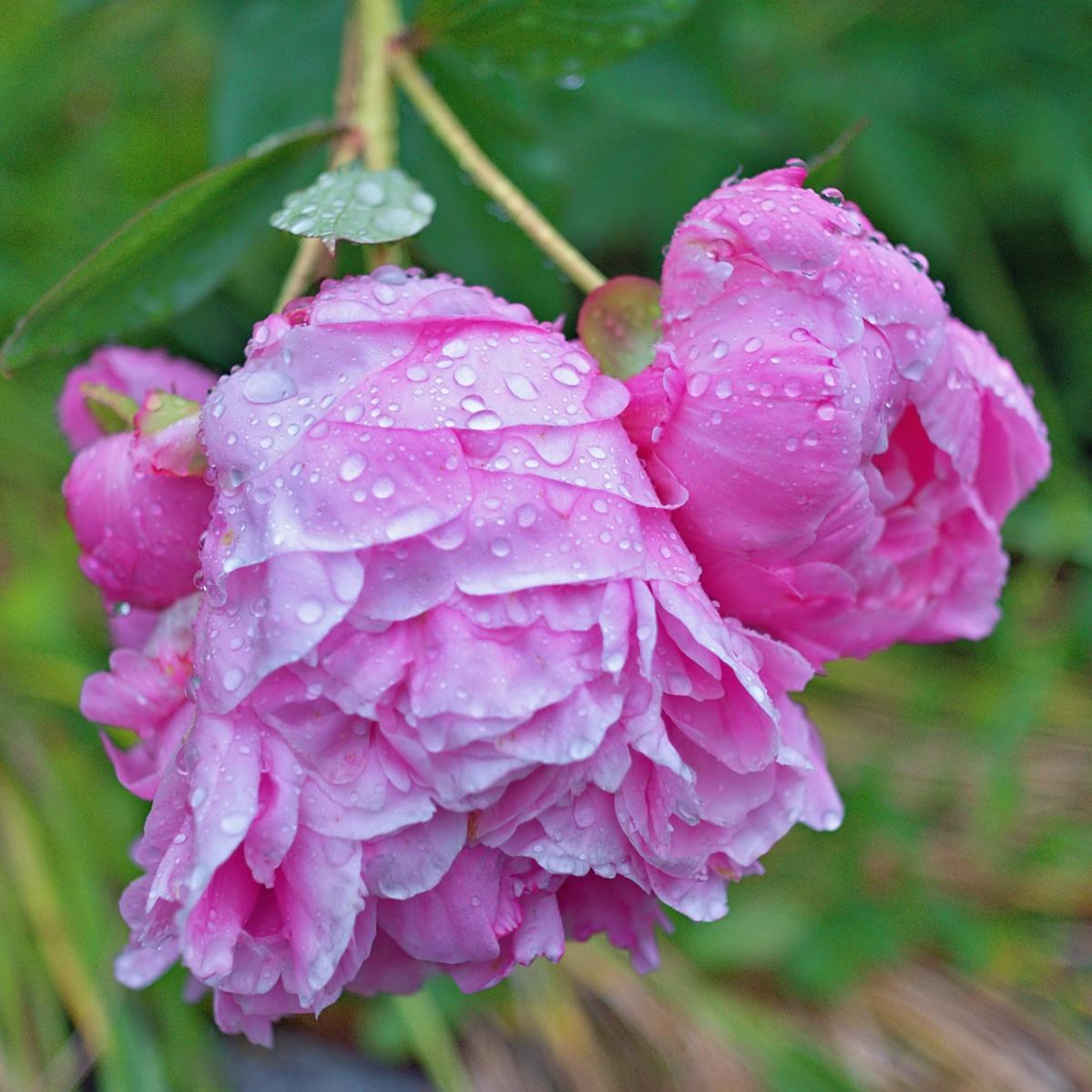 Eine weitere nasse Schönheit