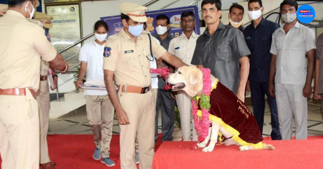 Telangana police's 'tracker' Labrador dog Munna retires from service at 11