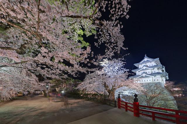 Hirosaki Sakura Matsuri (Cherry Blossom Festival), Hirosaki, Aomori