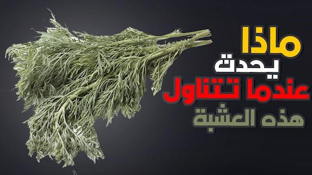 العشبة المعجزة الحارقه للشحوم و المذيبه للدهون...تعرف عليها !!!!