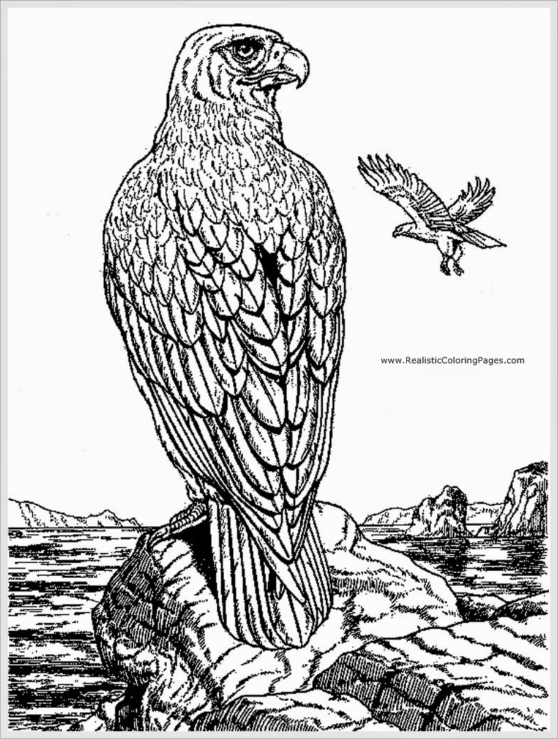 Eagle Coloring Pages For Adult Realistic Coloring Pages