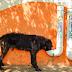 ZPP Meio Ambiente: Cidade do interior de SP produz comedouros com canos de PVC usados para alimentar animais de rua
