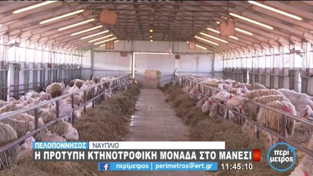 Αργολίδα: Μια πρότυπη κτηνοτροφική μονάδα στο Μάνεσι (βίντεο)
