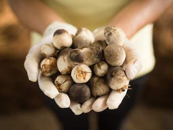 thủ tục xuất khẩu nấm