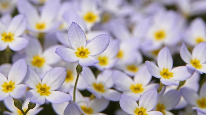 Top Wholesome Flowers That Can Be Added To Your Recipe