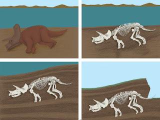 Restos de un dinosaurio fosilizándose