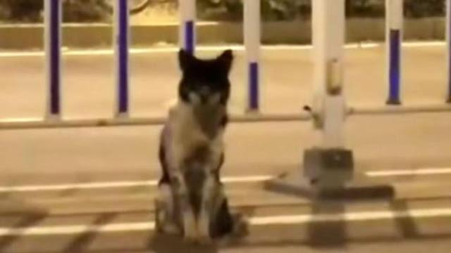 Верная собака два месяца ждет погибшую хозяйку около трассы