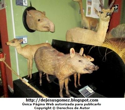 Foto de animales disecados en el Museo de Historia Natural por Jesus Gómez