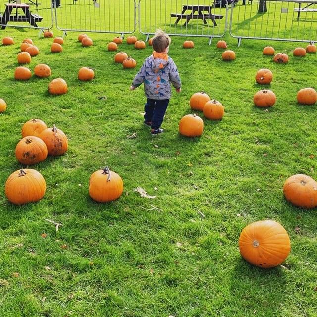 Little boy in a field of orange pumpkins
