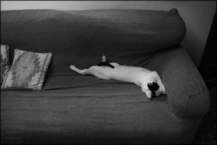fotografia,gato,dormido,rené