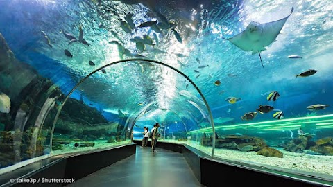 Get Ready: Ocean Park Cebu will be Official Open to Public