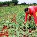Kits de irrigação incrementam produção de alimentos no Oeste da Bahia