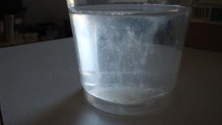 test du verre et de la salive et candida albican