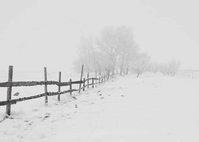 Himachal snowfall increases cold