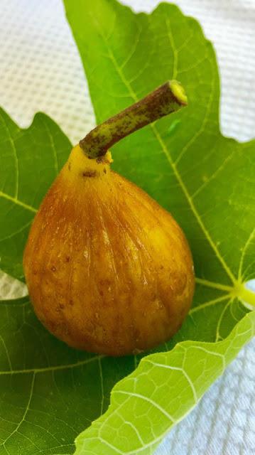 Monarki De Aur Fig