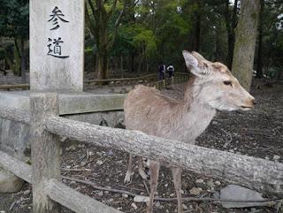 Seperti Inilah Kerajaan Rusa di Jepang