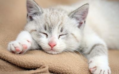 bahaya kurang tidur, keperluan tidur manusia
