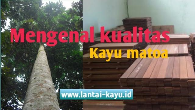 mengenal kualitas kayu matoa