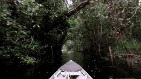 Sebangau National Park