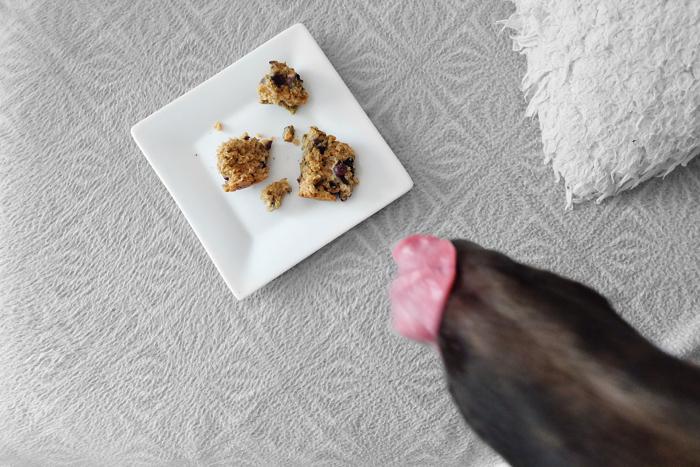 Finn eating pupcake off of a plate