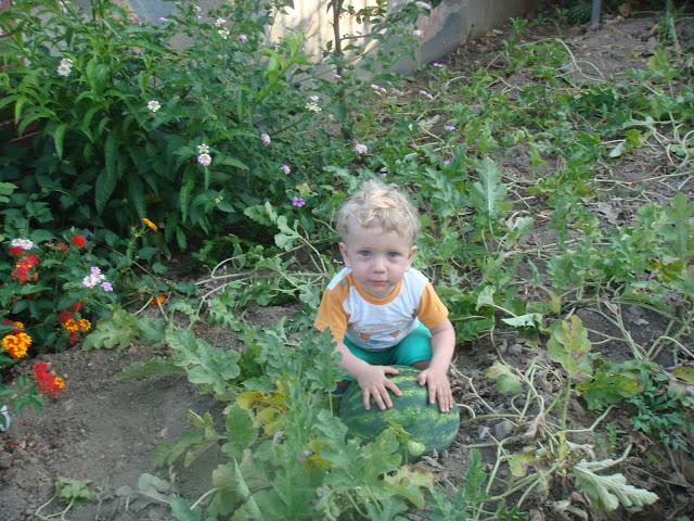 Akyaka Okaliptus lüks apartın bahçesinde karpuz koparırken