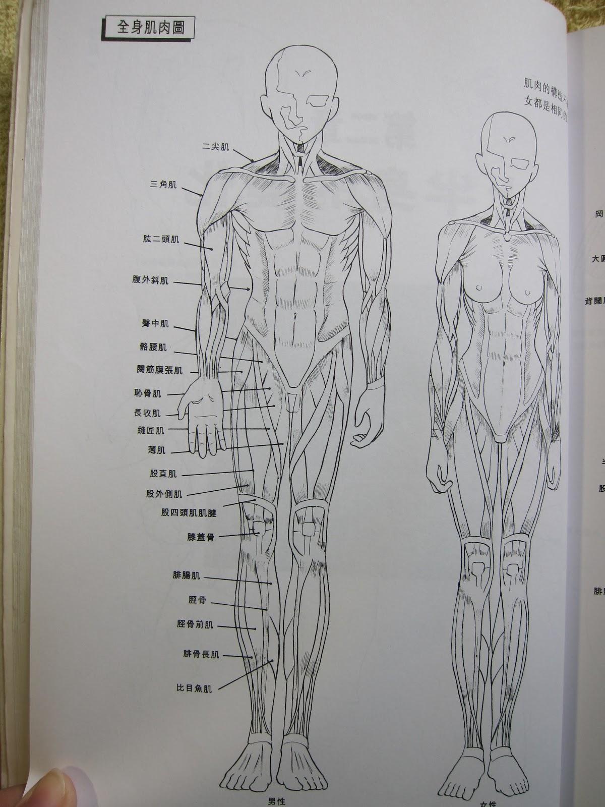 繪畫學園: 人體結構漫畫技法