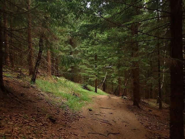 Ścieżka biegnie głównie lasem