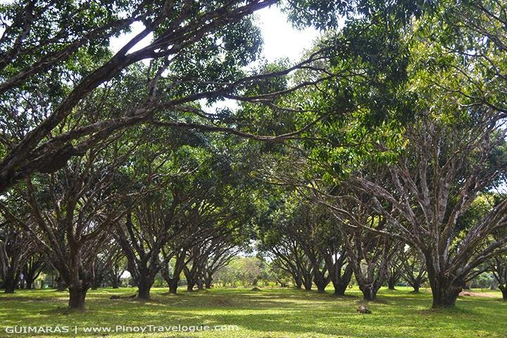 National Mango Research and Development Center, Guimaras