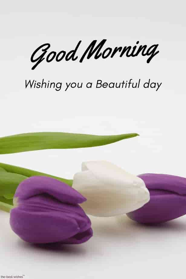 the best good morning images hd wishes with flowers