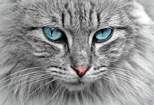 Runny Eyes   cats eyes watering