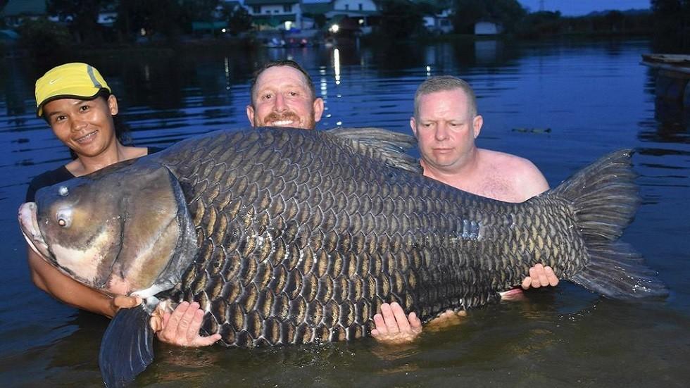 """إصطياد أكبر سمكة """"Giant barb""""في العالم بوزن خيالي"""